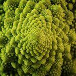 Romanesco - Maren Winter